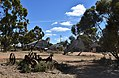 Patchewollock Big Mallee Fowl and Plough.JPG