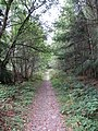Path to Ruddmoor Rigg - geograph.org.uk - 556491.jpg