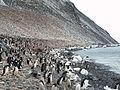 Paulet Island Adelie Pinguin Kolonie.JPG