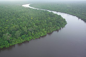 Borneo peat swamp forests - Peat swamp forest in Kalimantan