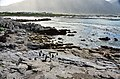 Penguin colony in Hermanus 05.jpg