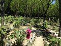 Peony garden in Miyajidake Shrine 1.JPG