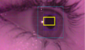Percept eye tracking.png