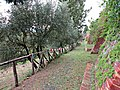 Percorso sentieristico sotto le Mura Medievali Ovest, 12.JPG