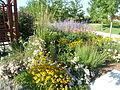 Perennial Yard.jpg
