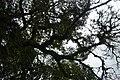 Perspektiven des Parque Nacional do Iguaçu 32 (22126045841).jpg