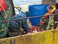 Pesca de centolla en la Bahía Ushuaia 24.JPG