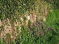Pflanzen vor und an einer Sandsteinmauer.JPG