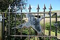 Pheasant immortalised - geograph.org.uk - 1005698.jpg