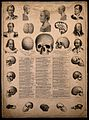 Phrenological chart with portraits of historical figures and Wellcome V0009494.jpg