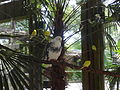 Pigeon and Parakeets, Wild Adventures 2015.JPG