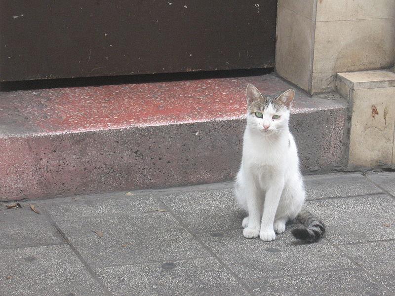 עיני חתול