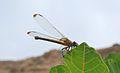 PikiWiki Israel 43278 Wildlife and Plants of Israel.JPG