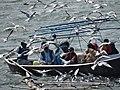 Pilgrim Boat with Seagulls - Sangam Site - Allahabad - Uttar Pradesh - India (12589795863).jpg