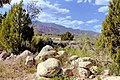 Pine Valley01.jpg