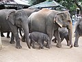 Pinnawale Elephant orphanage (7568426978).jpg