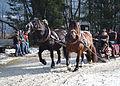 Pinzgauer Brauchtums- und Trachtenschlittenfest, 2. Februar 2014, 13.JPG