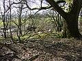 Pit (dis) - geograph.org.uk - 360468.jpg