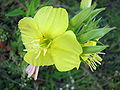 Plant 2008 1.jpg