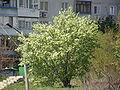 Plants in Donetsk 127.JPG