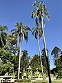 Playground in City Botanic Gardens, Brisbane, Queensland 01.jpg