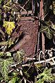Poertschach Friedhof Tuerdruecker des frueheren Nordausgangs 06012012 188.jpg