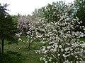 Poland. Warsaw. Powsin. Botanical Garden 045.jpg
