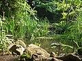 Pond in Sakuragaoka Sumireba Nature Garden (桜丘すみれば自然庭園) - panoramio.jpg