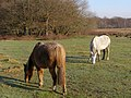 Ponies on White Moor, New Forest - geograph.org.uk - 299673.jpg