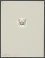 Porcellana hirta - - Print - Iconographia Zoologica - Special Collections University of Amsterdam - UBAINV0274 096 10 0005.tif