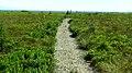 Port Joli Head Trail.jpg