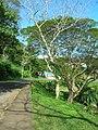 Port Vila city centre (7988637465).jpg