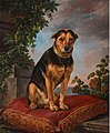 Portrait of a dog, seated on a red cushion, by Henri van Assche, 1801.jpg