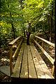 Prince William Forest Park PRWI9748.jpg