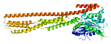 Protein GBP1 PDB 1dg3.png