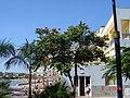 Puerto de Mogán 2005-01-08, Gran Canaria 03.jpg