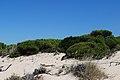 Punta Umbría, 21100, Huelva, Spain - panoramio (2).jpg