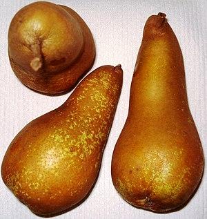 Abate Fetel - Abate Fetel pear