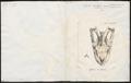 Python bivittatus - schedel - 1700-1880 - Print - Iconographia Zoologica - Special Collections University of Amsterdam - UBA01 IZ11800214.tif