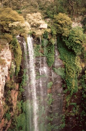 Gondwana Rainforests - Image: Queen Mary Falls 3