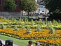 Queens gardens newcastle under lyme.jpg