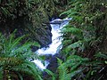 Quinault Small Waterfall.jpg