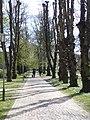 Rådhusparken (allé) 02.jpg