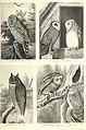 Révai nagy lexikona; az ismeretek enciklopédiája (1911) (14598124057).jpg