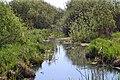 Rachyn Horokhivskyi Volynska-Luha-Rachynska nature reserve-left tributary of Luha river.jpg