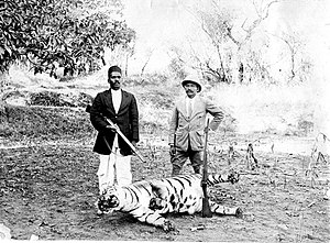 Junnar - Tiger hunting in Junnar.