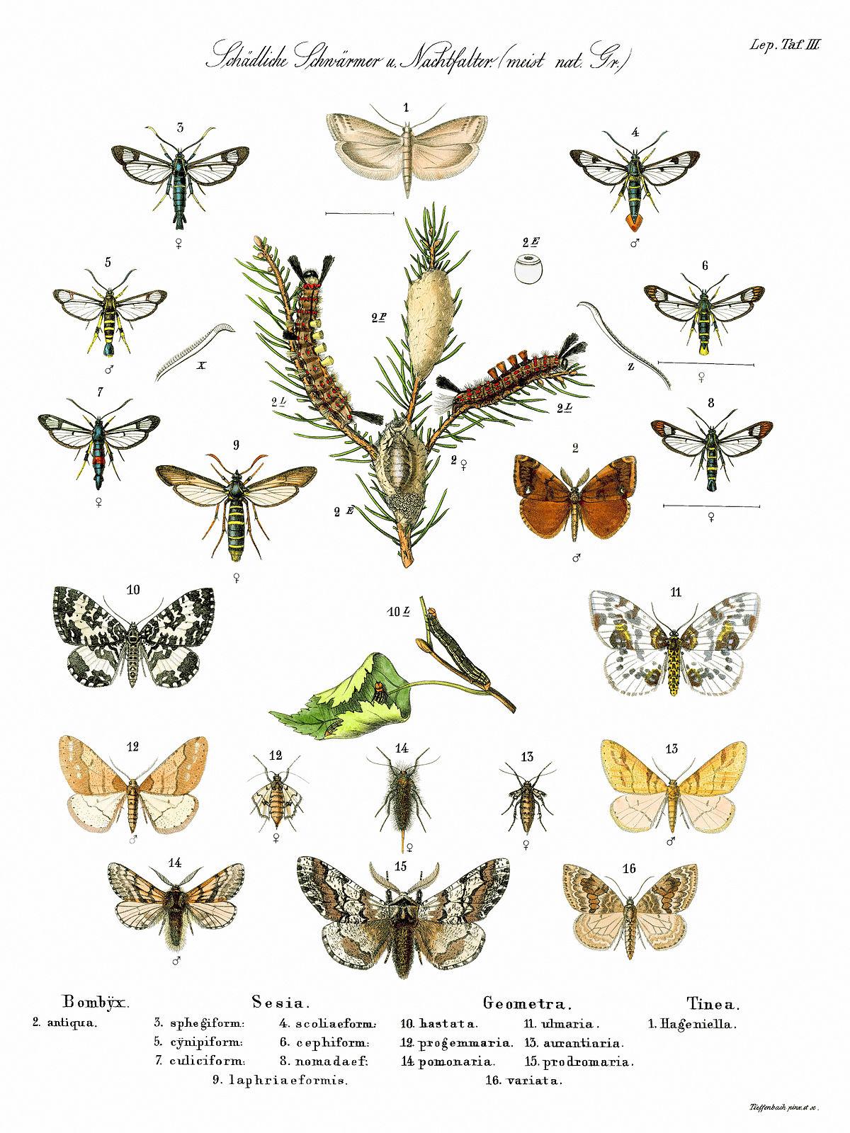 Schmetterlinge – Wikipedia