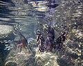 Red sea-reef 3764.jpg