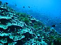 Reef2316 - Flickr - NOAA Photo Library.jpg