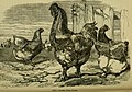 Reptiles and birds - a popular account of their various orders, with a description of the habits and economy of the most interesting (1883) (14565745548).jpg